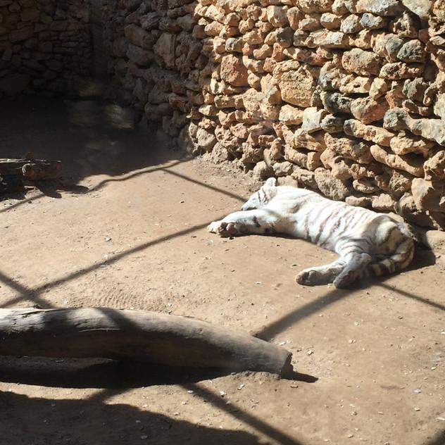 Marbella Zoo14