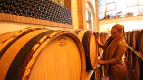 Vineyard Tour #1: Chinchilla Wines, Ronda