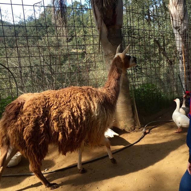 Castellar Zoo23