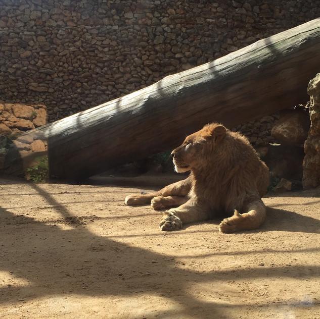 Castellar Zoo13