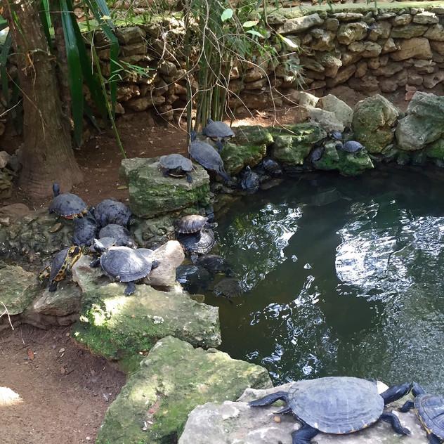Castellar Zoo3