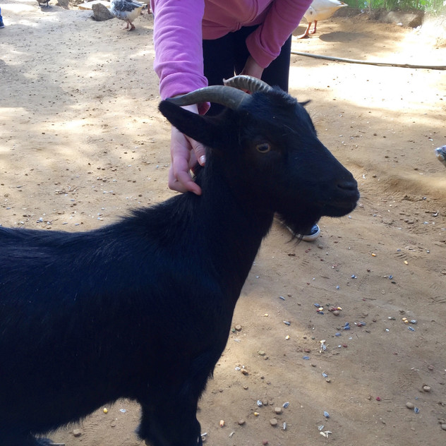 Castellar Zoo19