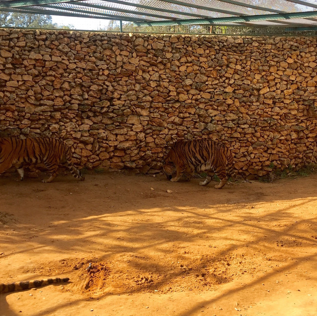 Castellar Zoo17