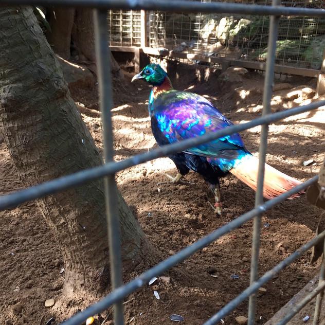 Castellar Zoo9