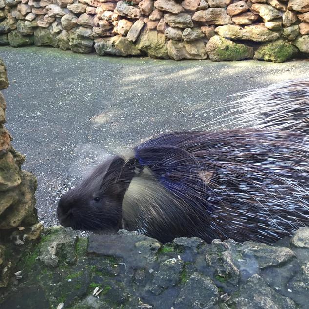 Marbella Zoo18