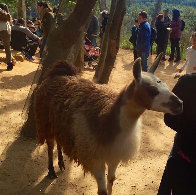 Castellar Zoo22