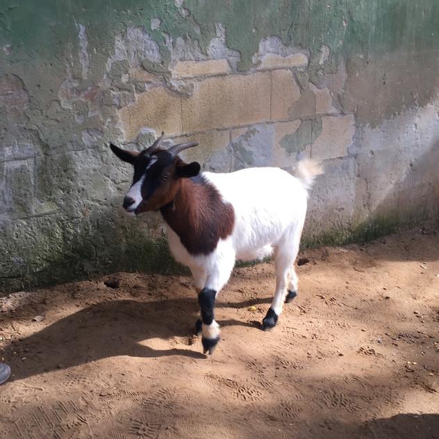 Castellar Zoo21
