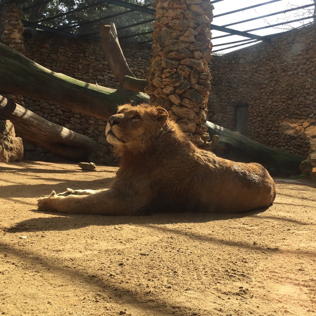 Castellar Zoo14