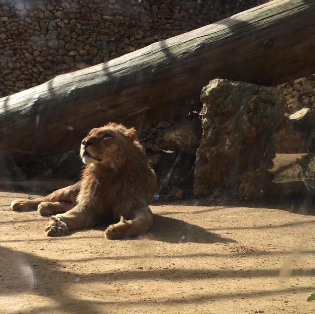 Castellar Zoo12