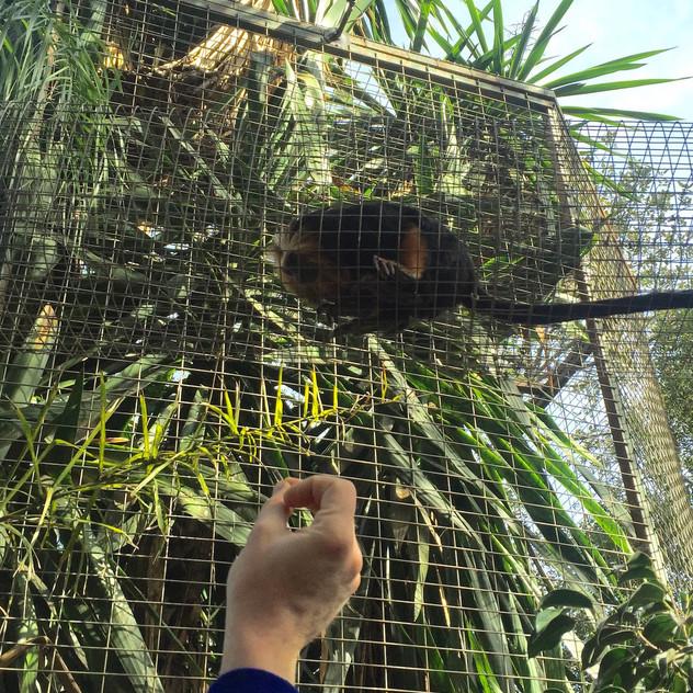 Castellar Zoo1