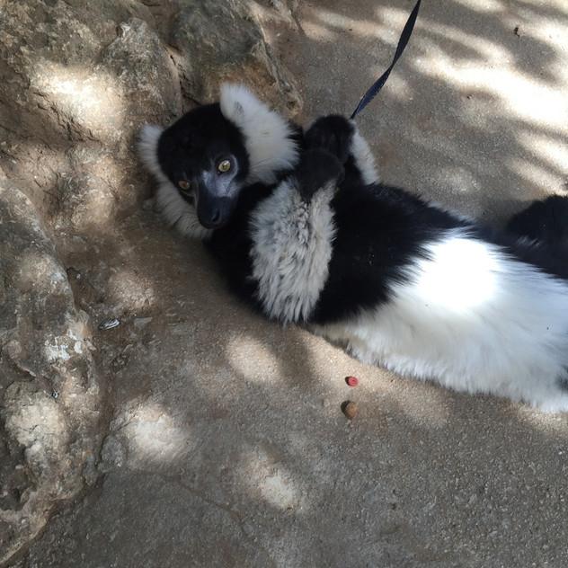 Marbella Zoo7