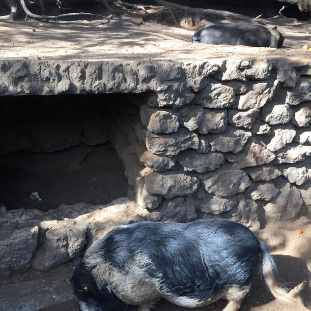 Marbella Zoo20