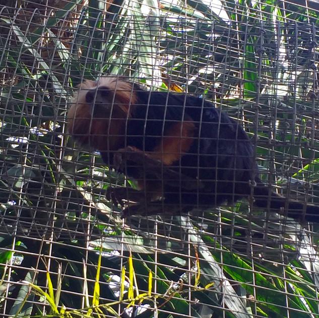 Castellar Zoo2