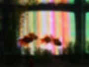 nam-june-paik_tv-fish_1975_1997.jpg