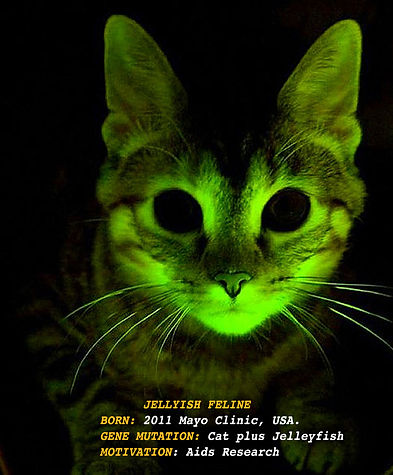 L_+Glowing Cat-1_300dpi.jpg