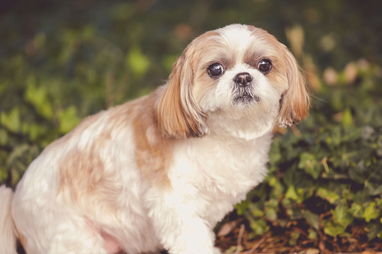 Pet Grooming (1 Pet)