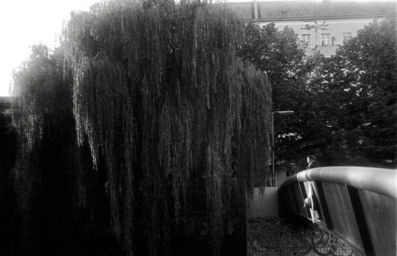 垂れ枝の美しい樹に佇む女性 (ベルリン)
