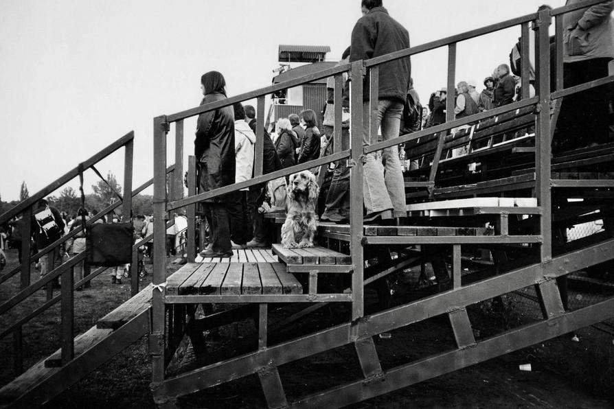 競馬場にいた犬 (バルビドゥビツェ競馬場・チェコ)