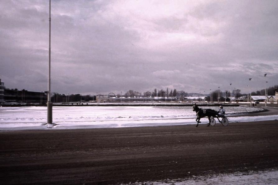 トロッター競馬の調教風景 (クリエアウ競馬場・ウィーン)