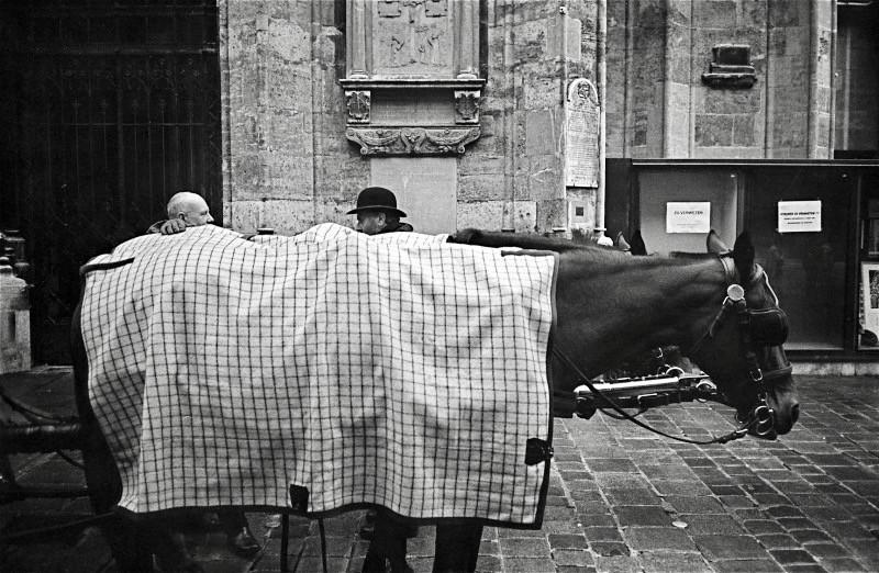 馭者の対話を聞いている馬 (ウィーン)