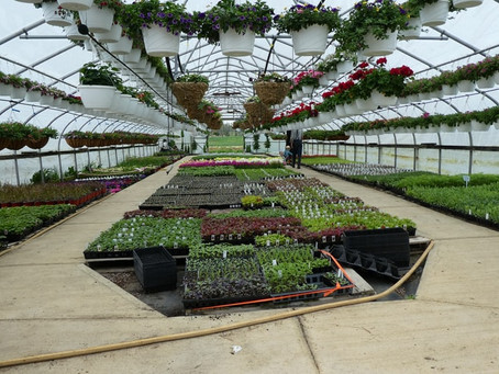 How to make your hydroponic farm profitable?