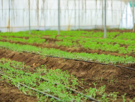 What are the benefits of Polyhouse farming?