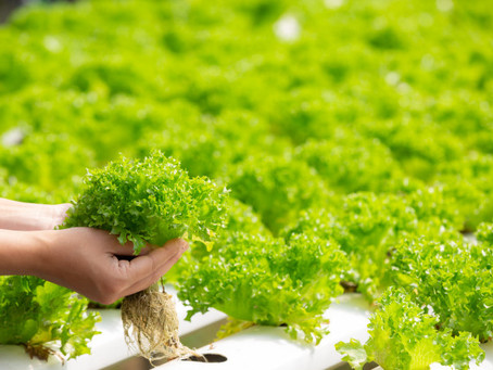 5 Cash Crops to Grow Hydroponically