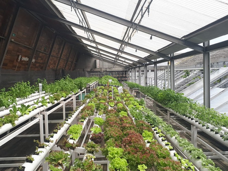 How much does it cost to set up a one-acre hydroponic farm?