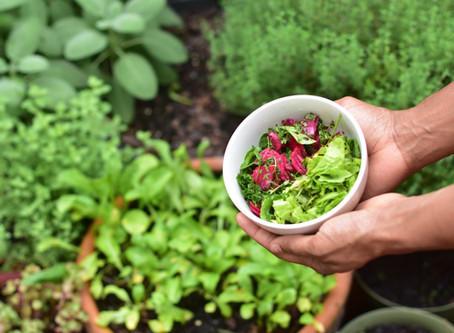 What is Urban Farming and it's Benefits?