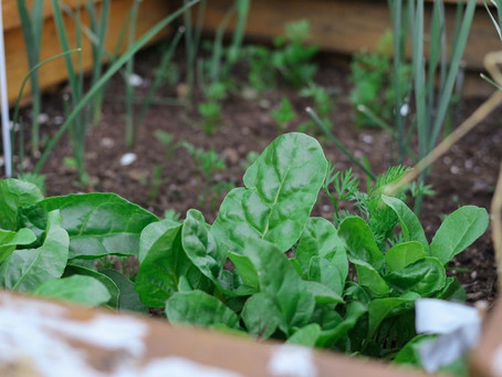 What are the different types of urban agriculture?