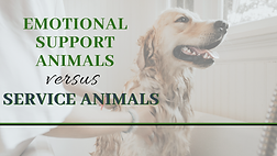 Emotional-Support-Animals-vs.-Service-An