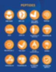 peptide pic.jpg