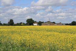 Farmyard View