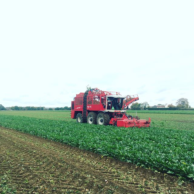 Gloomy day for lifting Sugarbeet #farmin