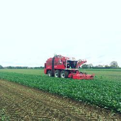 Gloomy day for lifting Sugarbeet #farmin