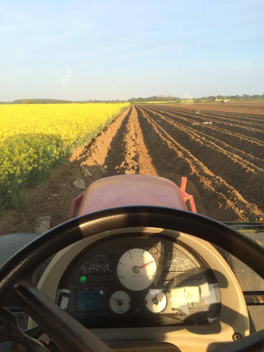 Potato planting season.