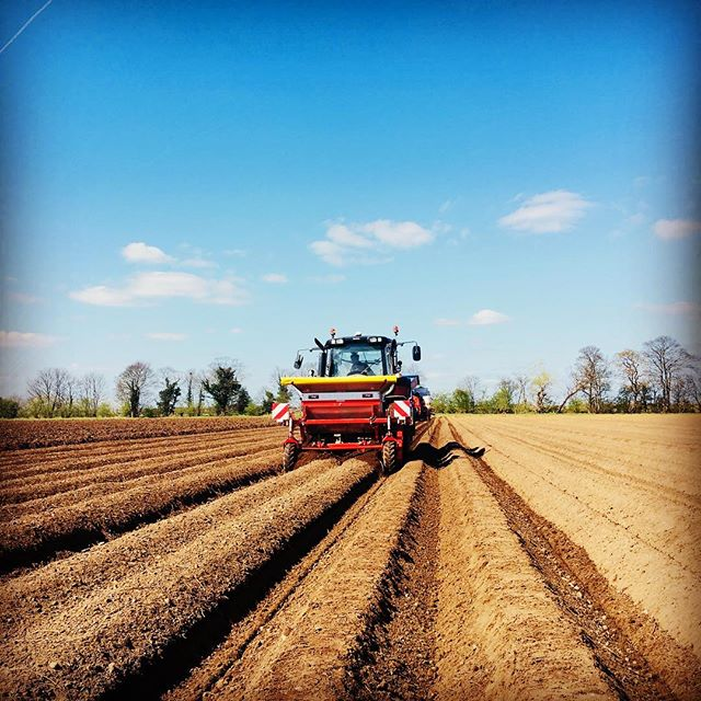Annual potato planting