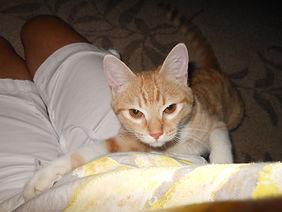 Cali orange kitty / Park City Pet Care
