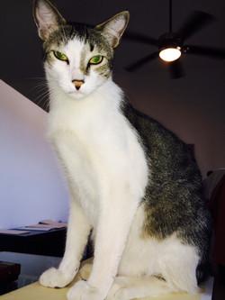 Mancha / Park City Pet Care