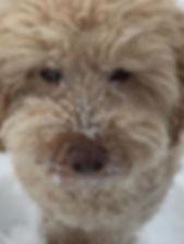 Furry Gus / Park City Pet Care