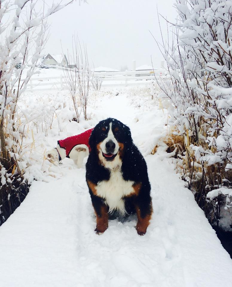 Faith / Park City Pet Care