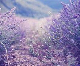 Lavender Massage Oil with CBD