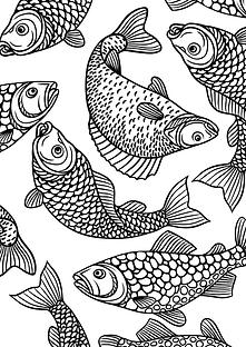 Fish colouring sheet FREE RESOURCE.png
