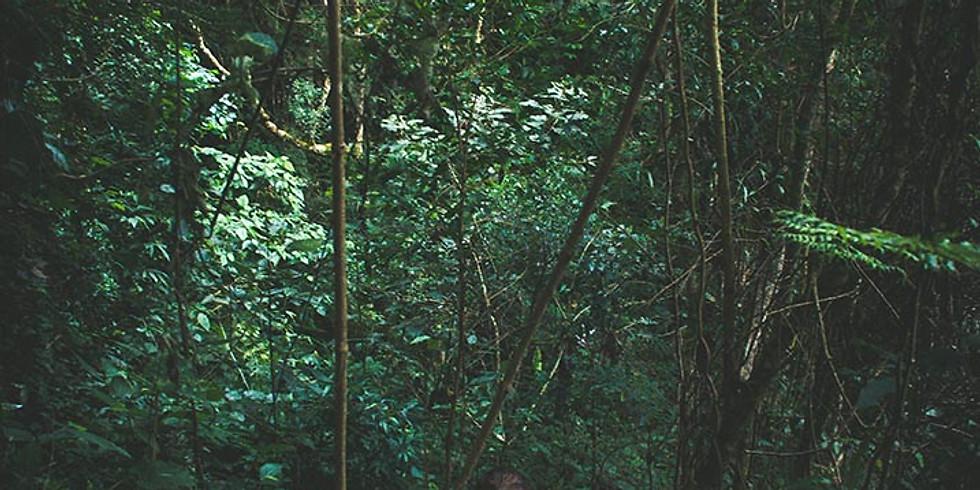 Vivência Florestal com Paolo Sartorelli