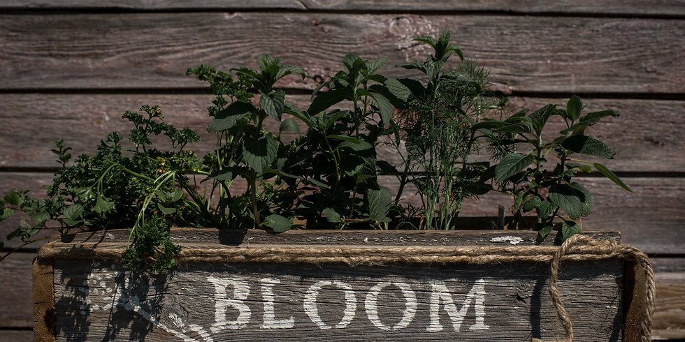 Barnwood Herb Box Workshop   BY APPOINTMENT ONLY   OR PICK-UP YOUR WORKSHOP BUNDLE TO DO AT HOME
