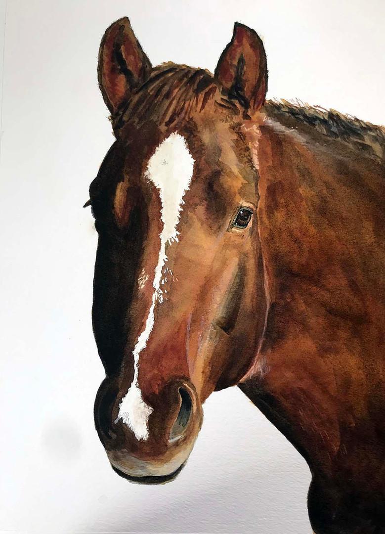 Maggie Daigle - Horse.jpg