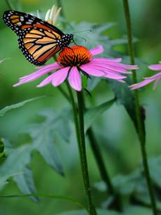 Linda Panzera - Butterfly.jpg