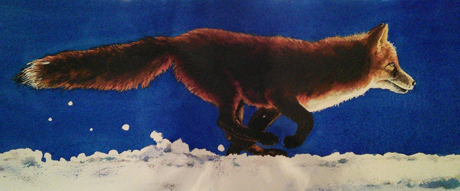 Andrea Dacko - Red Fox.JPG