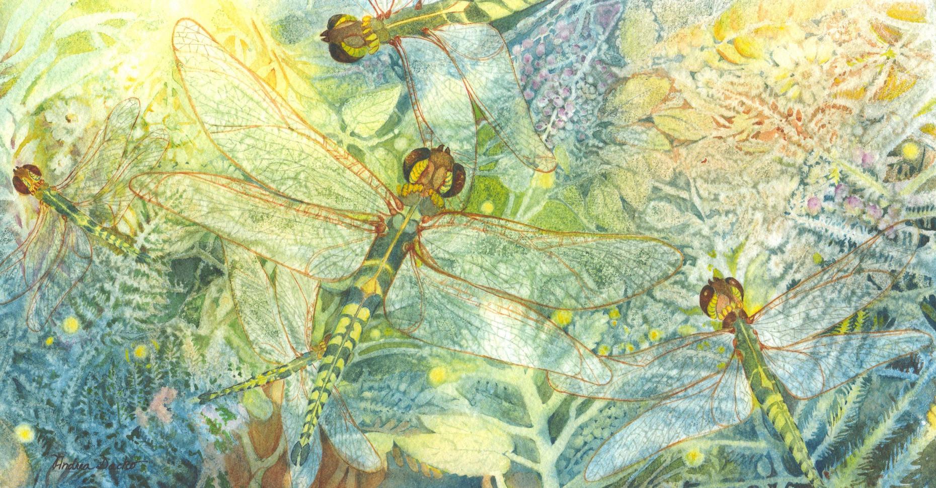 Andrea Dacko - Dragonfly Swarm.jpg