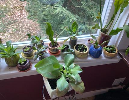Succulents (2).jpg